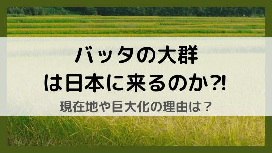 バッタの大群は日本に来るのか⁈なぜ巨大化した⁈大きさや現在位置が気になる!