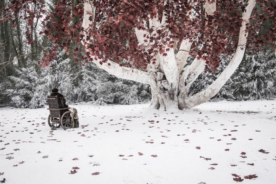 Bran has a talk with his weirwood tree friend. Photo: Helen Sloan / HBO