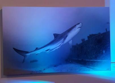 Oris-Tiburones-5