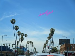 4) Palm trees in Sunset Blvd