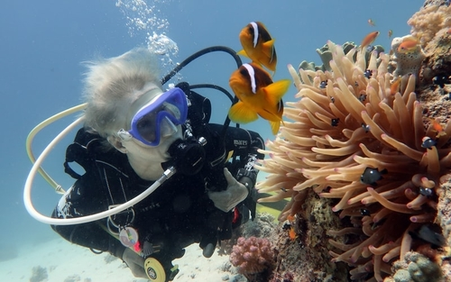 Scuba diver exploring corals while diving