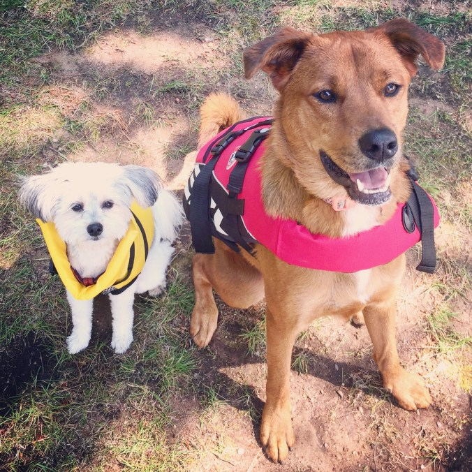 Scarlett and Paisley life vests