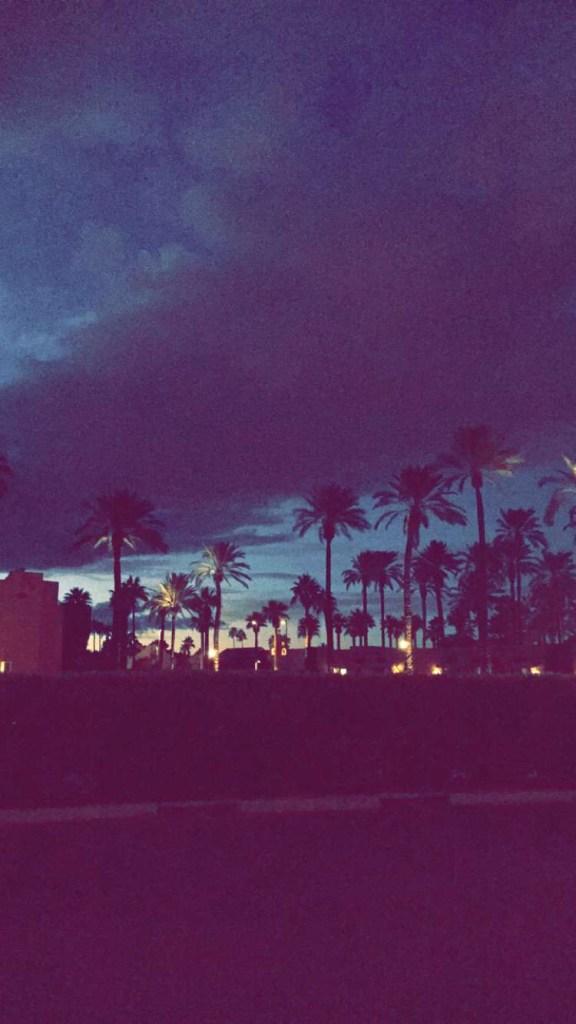 AZ palm trees