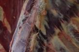 ribben en ruggengraat