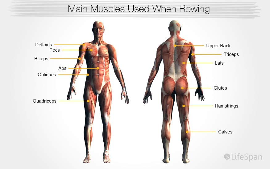 Used Rowing Machine >> Rowing Machine Exercises For Beginners Seniors Athletes