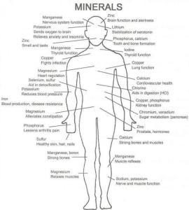 minerals-help-body