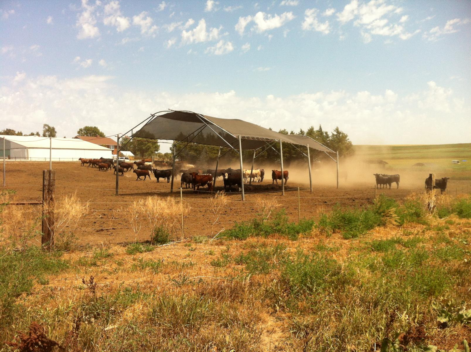 Beef Cattle Management Practices Worksheet