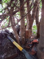 Looking for Garden solenoid