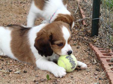 Finn and his ball