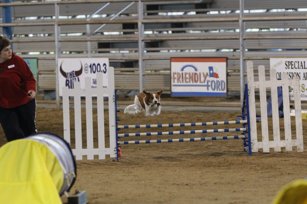 Lucy Agility Photo Gallery added