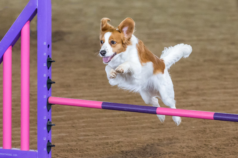 Lucy earns another agility title