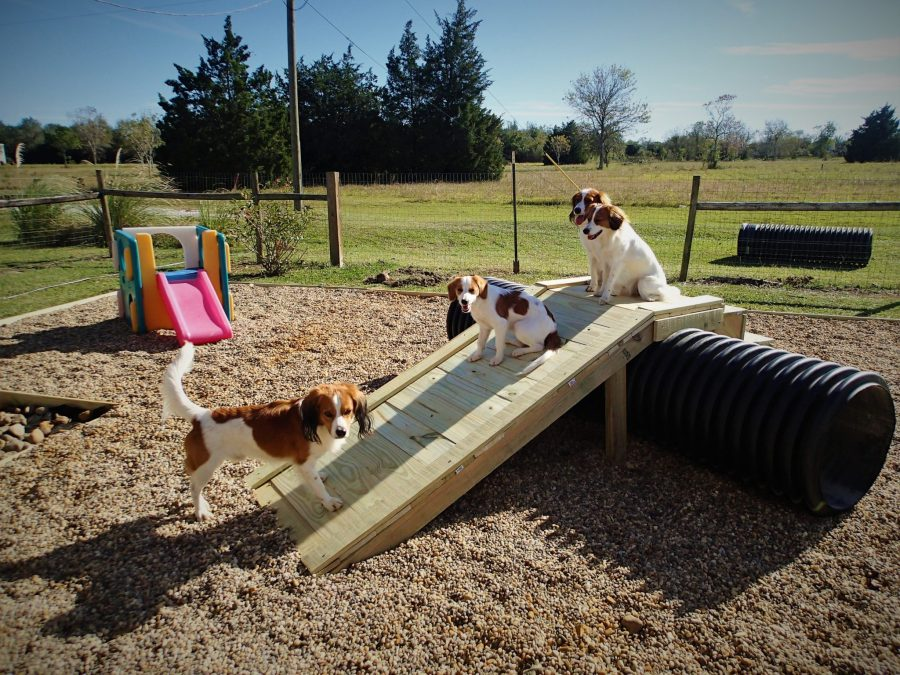 New puppy play yard