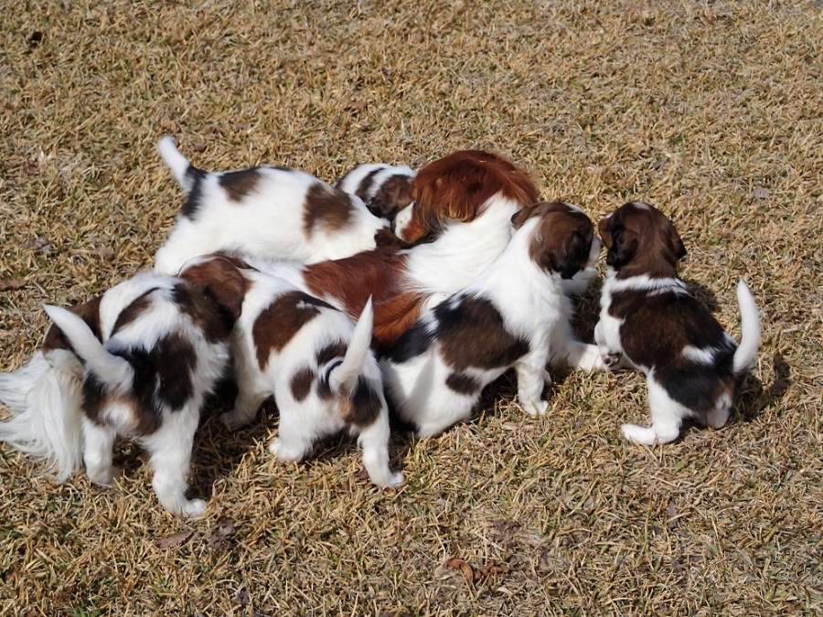 More firsts for puppies