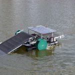 Waterbug on the water