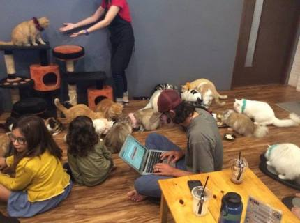 Cat Cafe (when you miss your dog but are desperate)