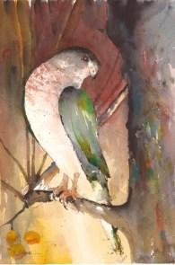 Pio Lyons, Hawk