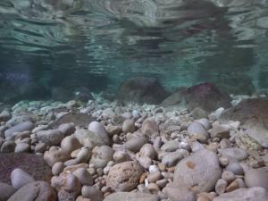 water, stream, pebbles 9 (widget)