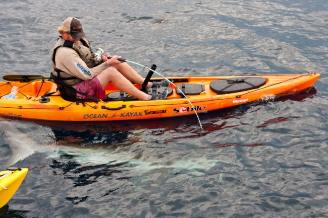 Kayak Fishing For Beginners The Essentials