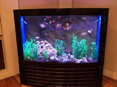 Aquariums   Unique Concept