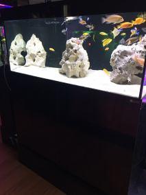 African Aquarium