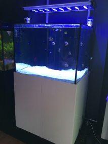 Aquareef Aquarium