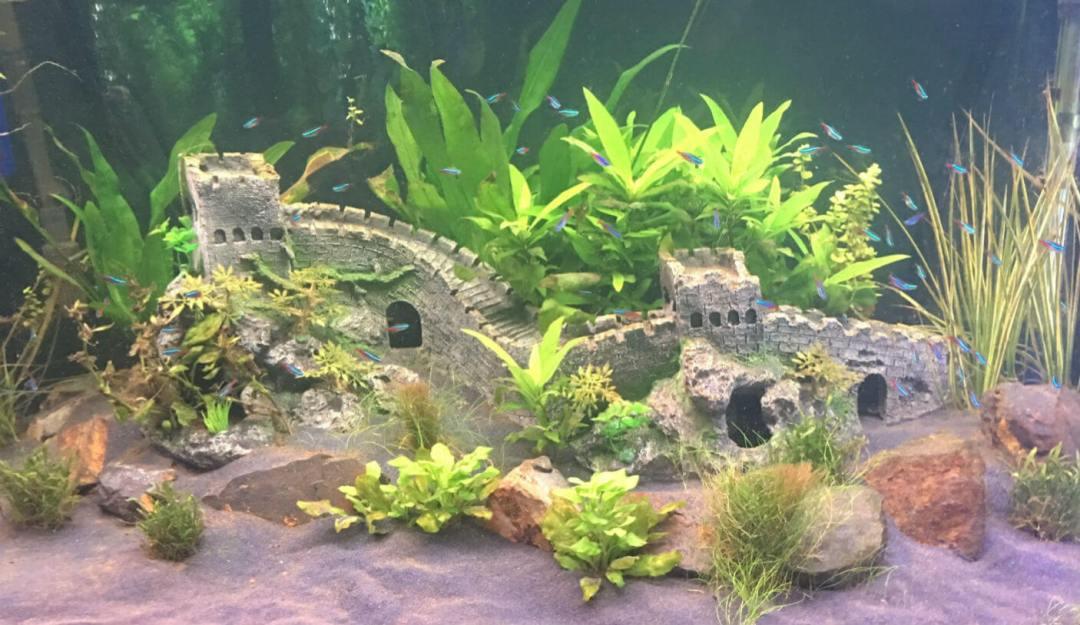 Aquatic Plants For Sale Melbourne