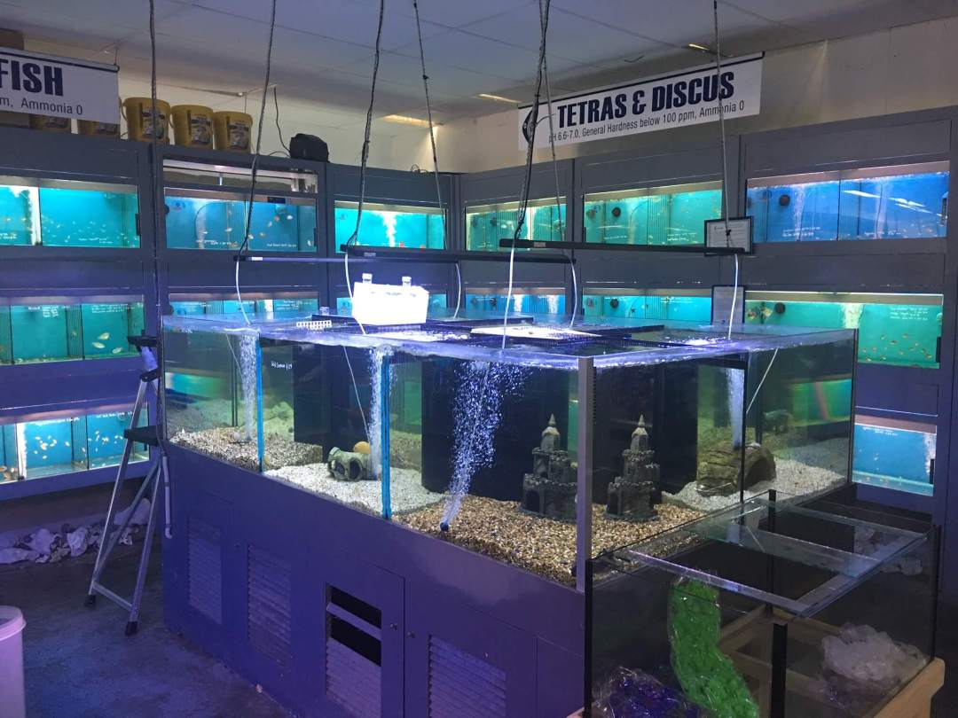 Tropical Fish Tanks For Sale