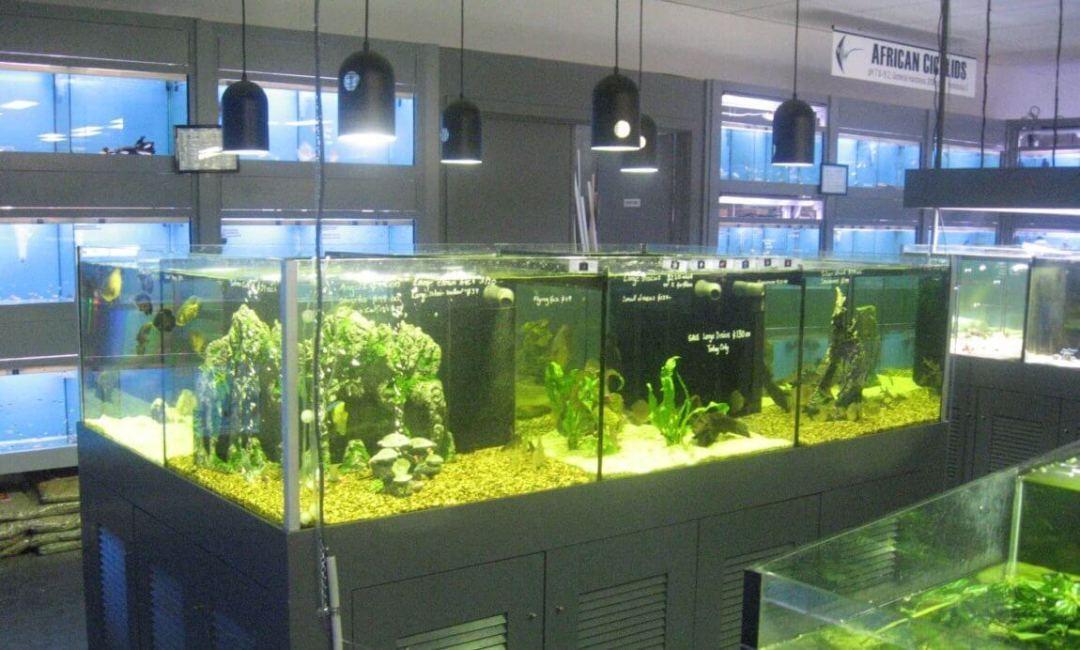 Aquarium Supplies | Aquarium Plants