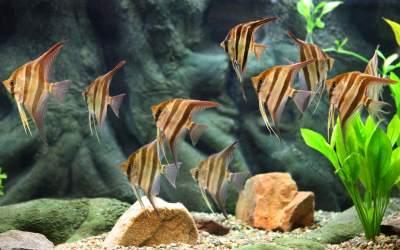 How to setup a Planted Aquarium