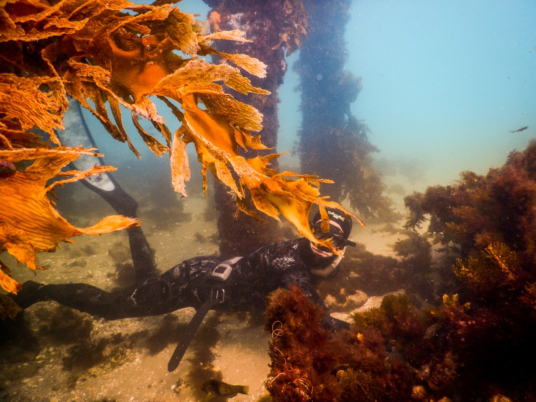 Become a Snorkel Instructor in Portsea