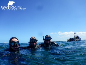 PADI Freediver certification Melbourne