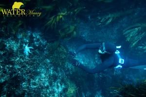 Freediving tasman peninsula tasmania