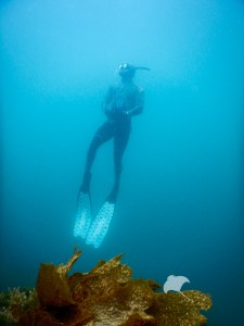 Freediving Mornington Peninsula