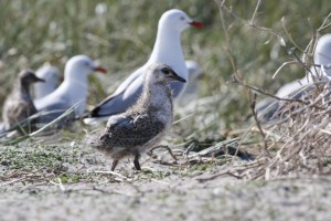 Mud Islands Bird Watching Guided Tour Port Phillip Bay