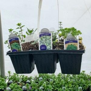 Sampler Pack (Sweet Majoram, Hot & Spicy Oregano, Curly Parsley, English Thyme, Upright Rosemary, Common Sage)