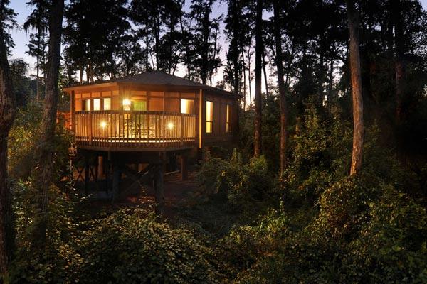 Disney Saratoga Springs Resort Treetop Villa lit up at night on the water 600