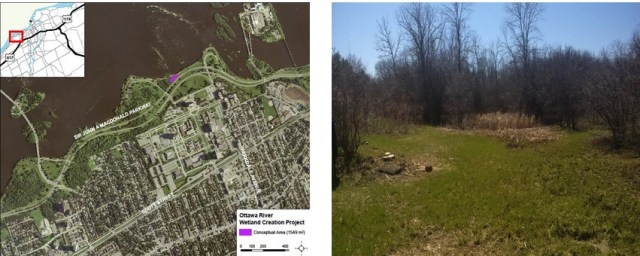 Left: The site location, Right: Before the excavation, it was nothing special. Now, it will be a new home for lots of wildlife!