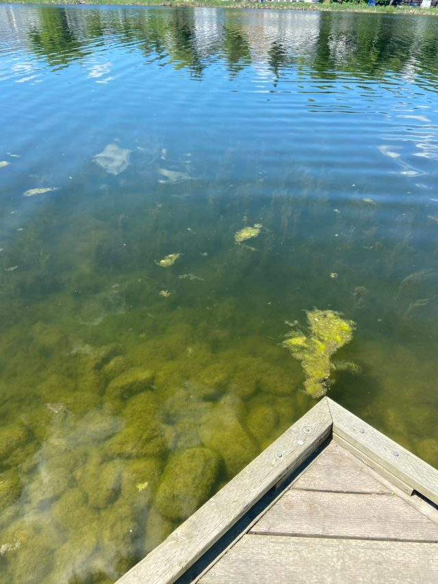 Murky water at Gillies Lake, which our intern never noticed before. Testing gave her a whole new perspective on the water there.