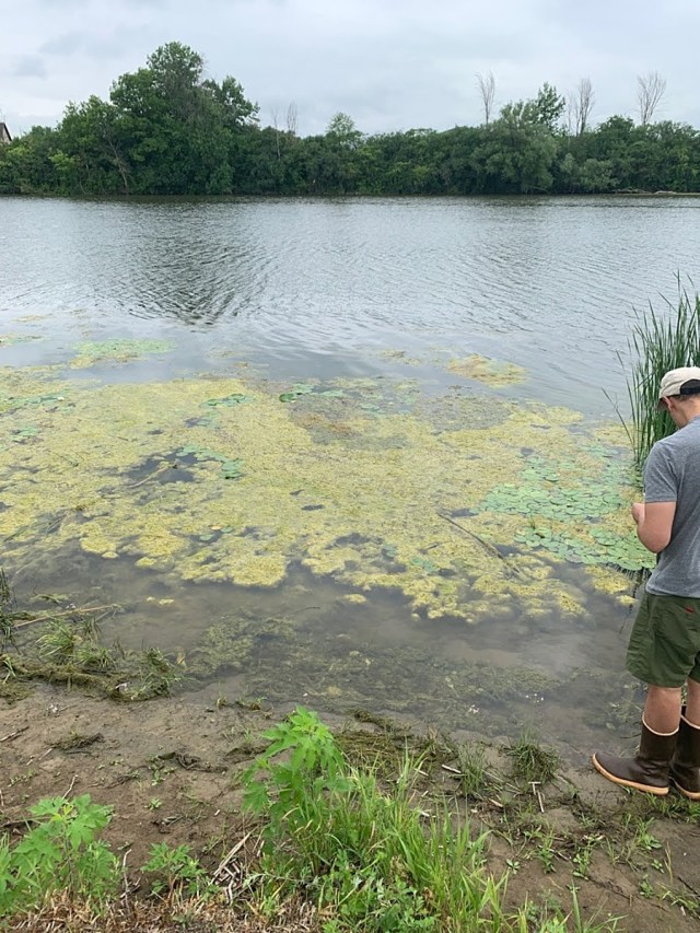 Algae bloom on the water