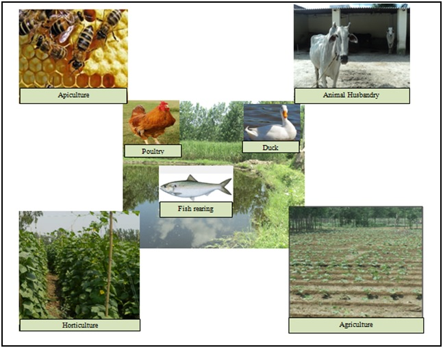 Integrated Farming System(IFS)