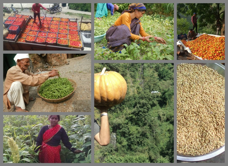 Agribusiness -A better option for livelihood enhancement
