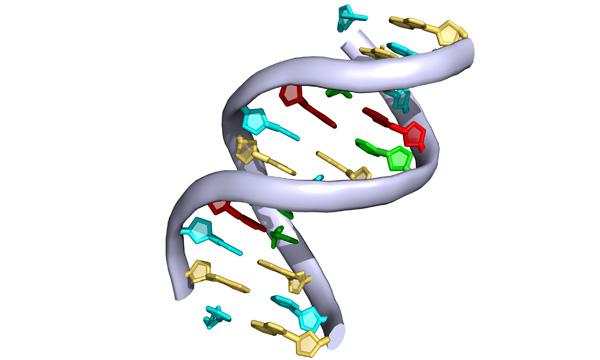 pymol_DNA_600px_white
