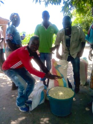 Making the maize ready for grinding into flour! The little men assisting the old lady to take some maize to the mill!