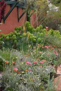 This drought tolerant border features plenty of green, yet there isn't a spec of lawn in sight!