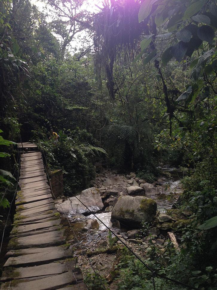 Cocora Hike, suspended bridge