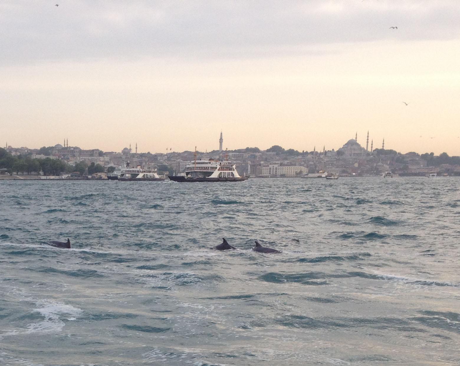 Istanbul, Turkey, Dolphins Bosphorus