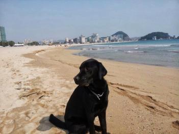 Our home beach