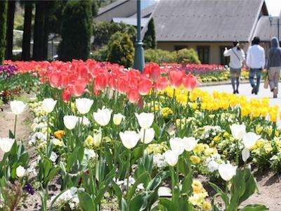 N.สวนแห่งหมู่บ้านเกษตรกรรมคันซากิ ป่าโยเดล