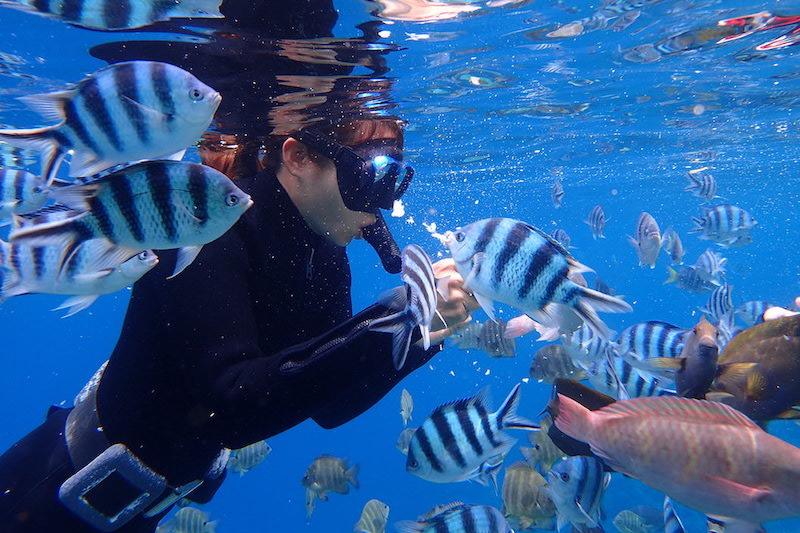 近距離接觸海洋生物(Marine Club Gig行程)