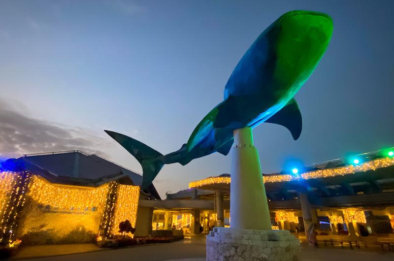 沖繩美麗海博物館值得親子一同來探索
